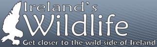 Ireland'sWildlife