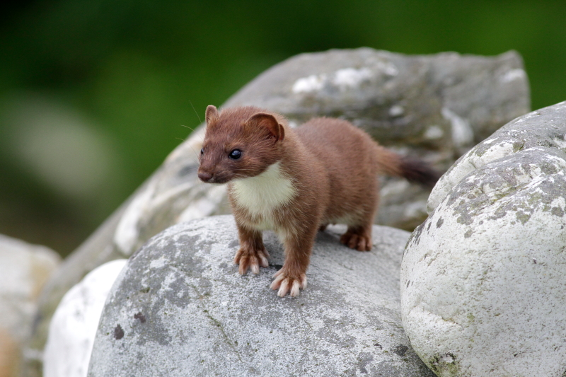 Ireland Wildlife